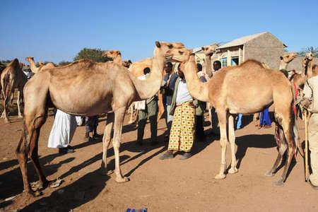 The livestock market