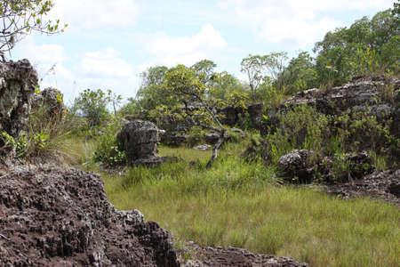 meta: Eastern regions of Colombia.