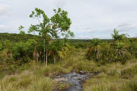 meta: Surrounding the river Guayabero