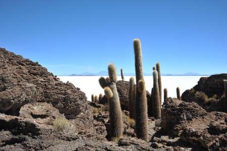 vertex: Island Inca Wasi - cactus island