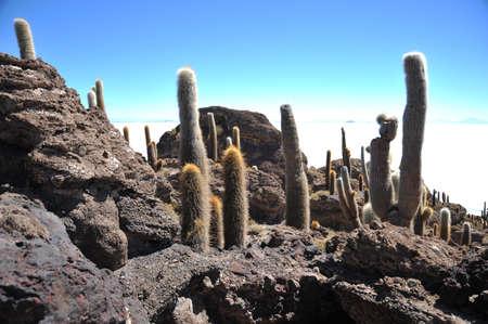 inca: Island Inca Wasi - cactus island