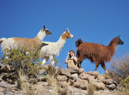 vast: Tourists I take pictures of Lamas of in the vast Altiplano