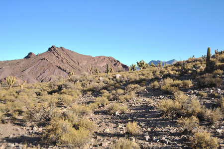 andes: Altiplano is a vast plateau in the Andes mountains. Editorial
