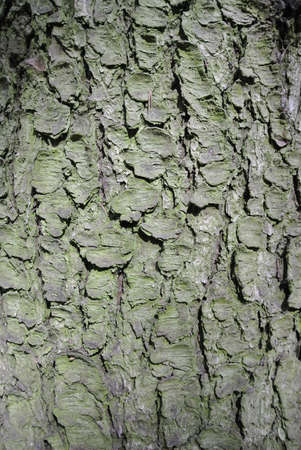 cracky: Tree trunk bark texture