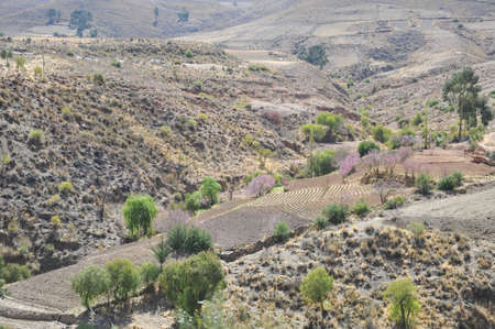 subsistence: altiplano