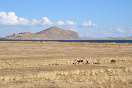 surroundings: Surroundings mountain lake Titicaca. Bolivia