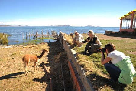 vicuna: Tourists take pictures of the vicuna on the shores of lake Titicaca.