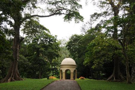 plants species: Giardini unici Reale Botanico di Peradeniya � considerato come uno dei migliori in Asia, in quanto contiene una raccolta di 4.000 specie di piante.