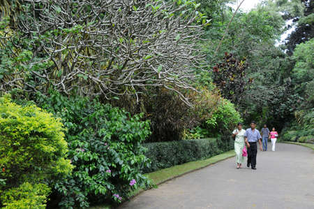 as one: Unique Royal Botanical gardens in Peradeniya is considered as one of the best in Asia Editorial