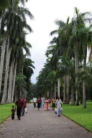 plants species: Giardini unici Reale Botanico di Peradeniya è considerato come uno dei migliori in Asia, in quanto contiene una raccolta di 4.000 specie di piante.