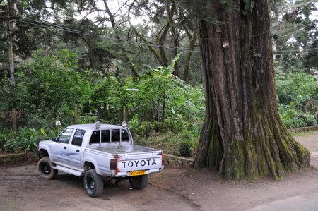 ceylon: The jeep at the big tree on the island, Ceylon