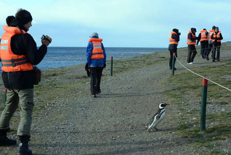 strait of magellan: Magellanic Penguins at the penguin sanctuary on Magdalena Island in the Strait of Magellan near Punta Arenas in southern Chile. Editorial