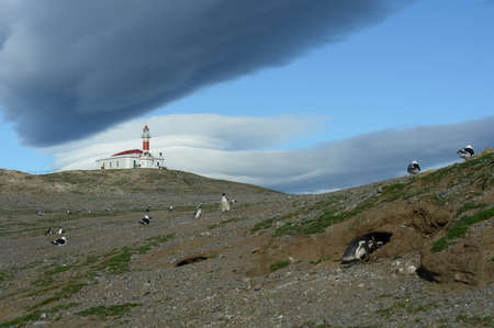 strait of magellan: The lighthouse on the island of Magdalena.Magellanic Penguins at the penguin sanctuary on Magdalena Island in the Strait of Magellan near Punta Arenas. Stock Photo