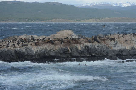 islets: South American sea lion, Otaria flavescens, breeding colony and haulout on small islets just outside Ushuaia.