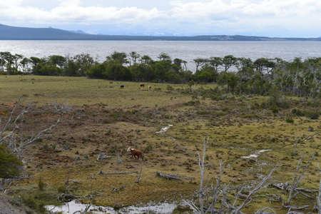 tierra del fuego: The Lago Blanco on the island of Tierra del Fuego