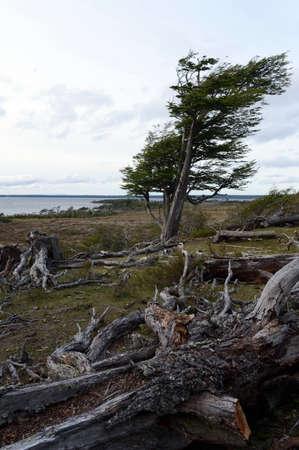 tierra del fuego: The Lago Blanco on the island of Tierra del Fuego.