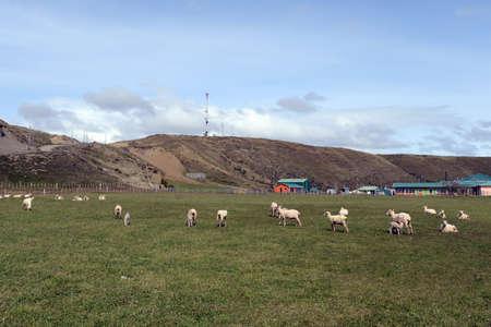 magallanes: Pasture for sheep in the village of Cameron. Tierra Del Fuego.