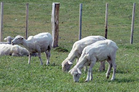 tierra: Pasture for sheep in the village of Cameron. Tierra Del Fuego.