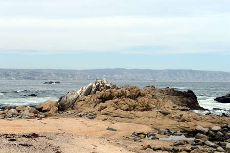 agglomeration: Rocky beach in Vina del Mar. Stock Photo