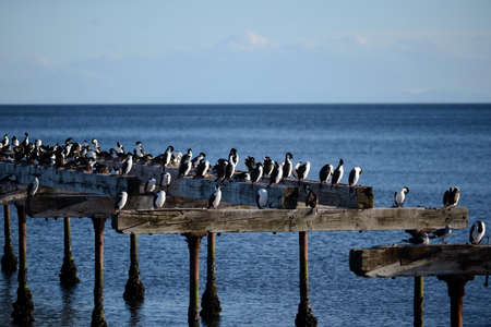 Cormorants on the shore of the Strait of Magellan.