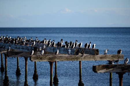 strait of magellan: Cormorants on the shore of the Strait of Magellan.