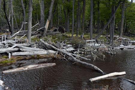 tierra: The dam, built by beavers in Tierra del Fuego.