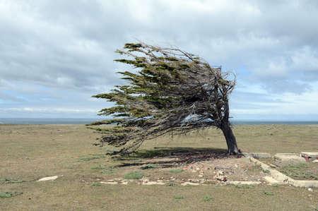 tierra del fuego: The tree in the archipelago of Tierra del Fuego. Stock Photo