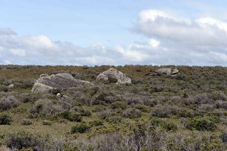 tierra del fuego: Traces of the glacier in Tierra del Fuego.