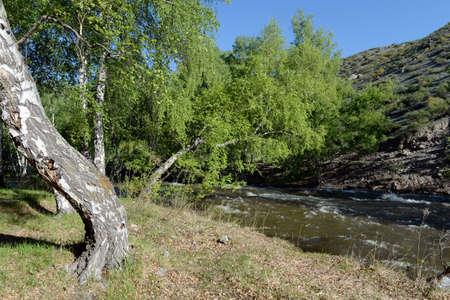 Mountain river Bolshoy Yaloman in the Altai Republic Stock Photo