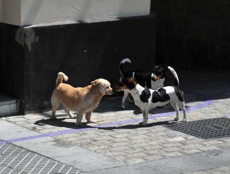 Dogs Cadiz