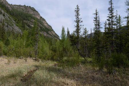 Taiga landscape, Aktash, Ulagansky District, Altai, Siberia, Russia Reklamní fotografie - 118497782