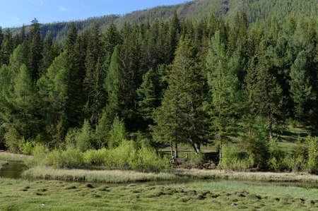 Mountain river in Altai Republic Reklamní fotografie - 116774111