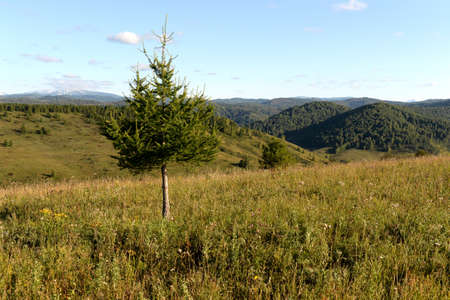 Russia.Western Siberia. The foothills of the mountains