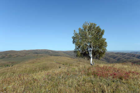 Altai foothills. The expanses of the Chineti reserve. Western Siberia.