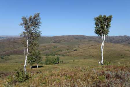 Foothills of the Altai Mountains. Western Siberia. Russia