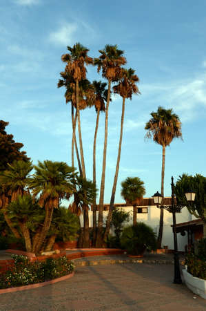 Palm trees on Cabo Roig in Orihuela Costa. Spain