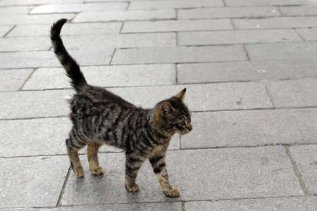 Homeless gray kitten on the street of Istanbul
