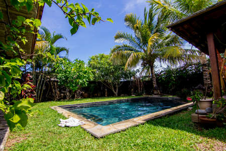 Swimming pool and palm trees in the backyard photo