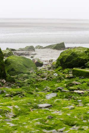 plantas acuaticas: Piedras cubiertas con las plantas de agua verde en la orilla del r�o