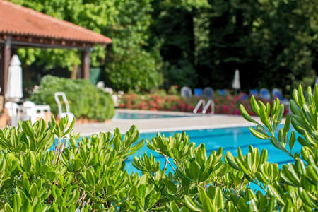 Relaxation zone with greenery and swimming pool photo