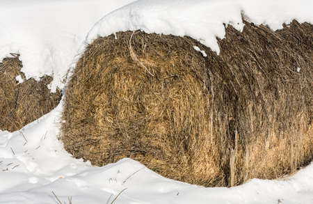 entered: Round haystacks in the field, entered the white snow.
