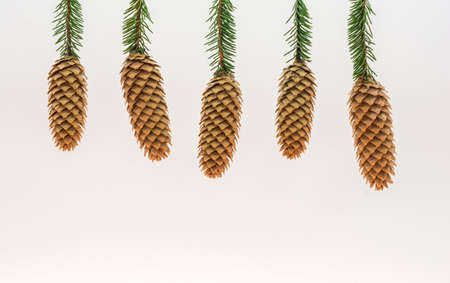 fir cones: Five fir cones on the green branches. The background is white. Stock Photo