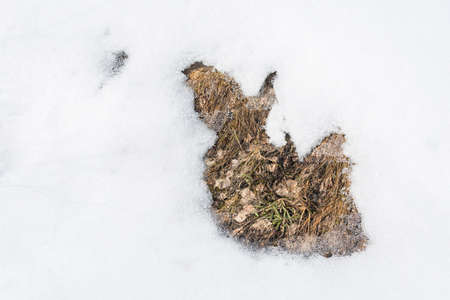 macrophoto: Spring thaw with grass on white snow.