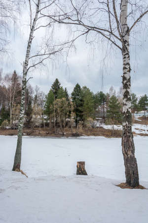 Two birch trees standing on the banks of the river covered with ice. photo