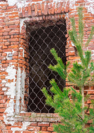 window opening: Young green pine tree on the background of old brick wall and the window opening.