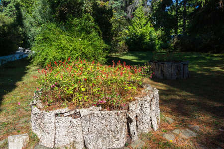 flowerbed: Original flowerbed with red flowers in the Sochi Park ? the arboretum. Stock Photo