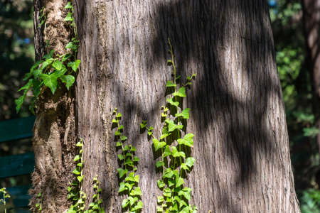 macrophoto: Bright green sprouts on grey climb the trunks of trees.