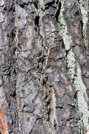 macrophoto: Bright and interesting texture of a tree trunk.