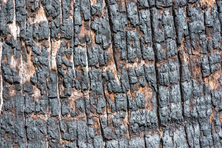 macrophoto: Bright and interesting textures burning tree trunk.