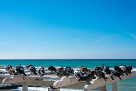 A flock of pigeons resting on the canopy beach on the Black sea.